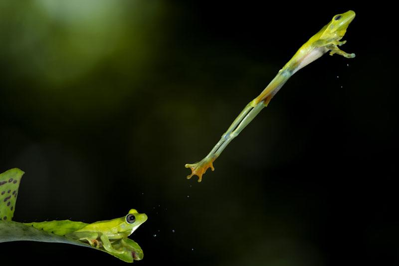 1-hudson-garcia-brazil-finalist-nature-wildlife