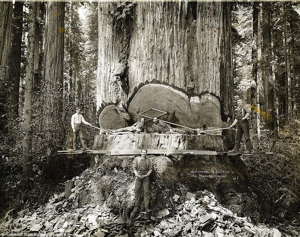 historical-photos-pt3-california-lumberjacks