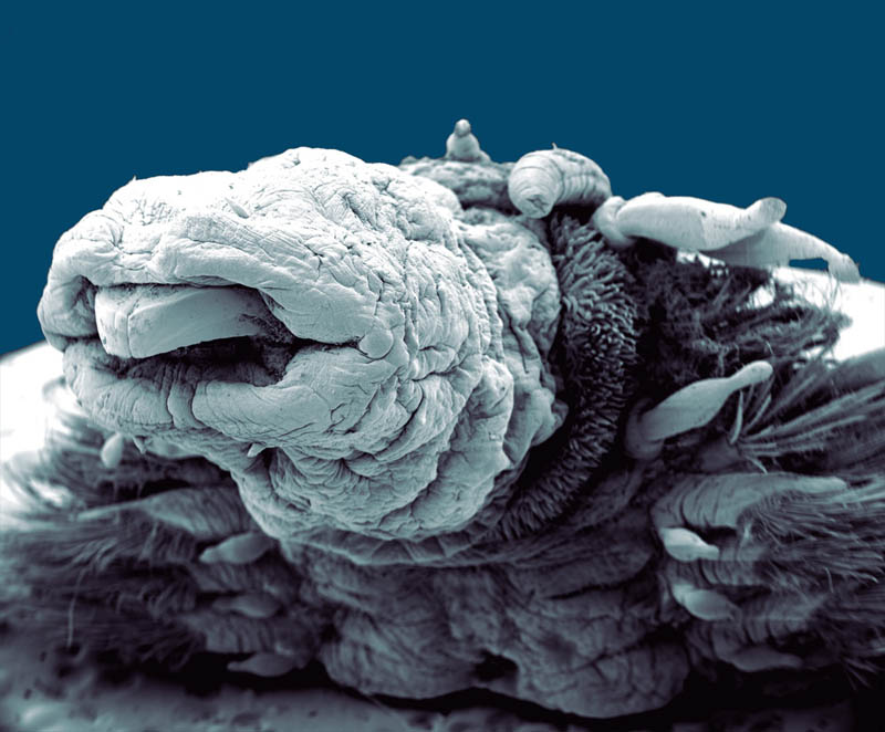 hydrothermal-worm-macro-philippe-craqssous