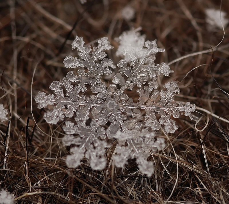 macro-photograph-of-a-snowflake-by-andrew-osokin-1