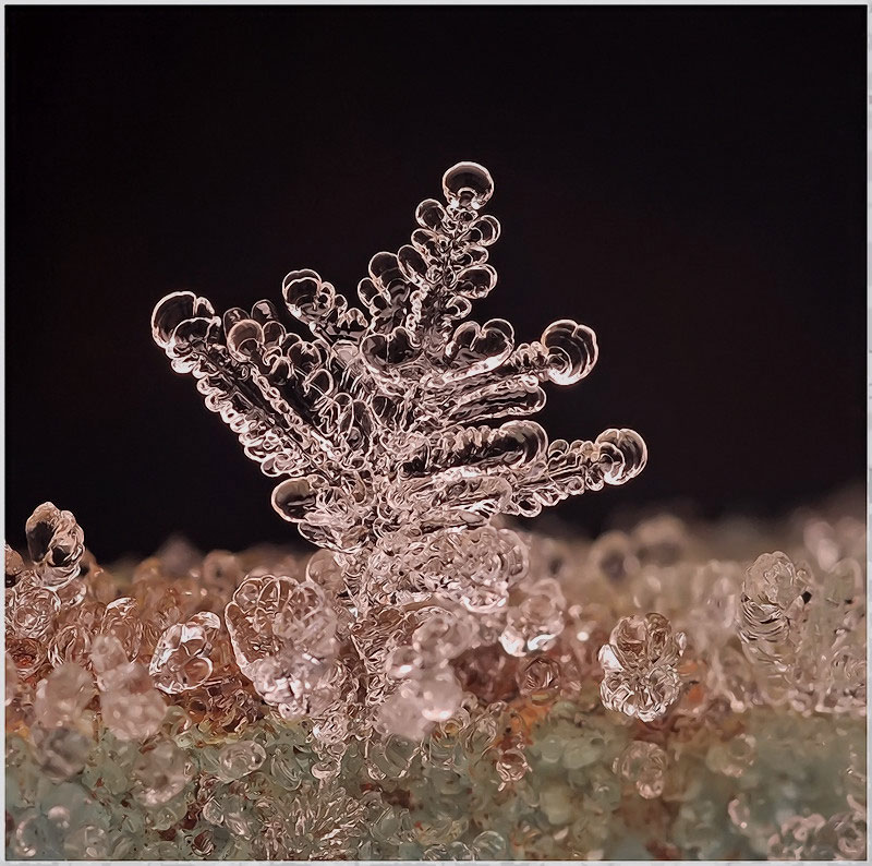 macro-photograph-of-a-snowflake-by-andrew-osokin-7