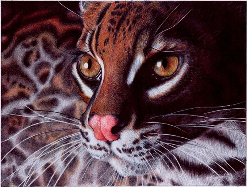 margay_cat___bic_ballpoint_pen_by_vianaarts