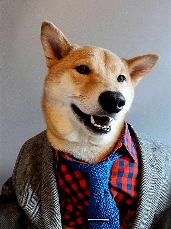 menswear-dog-dressed-in-clothes-fashion-look-book-2