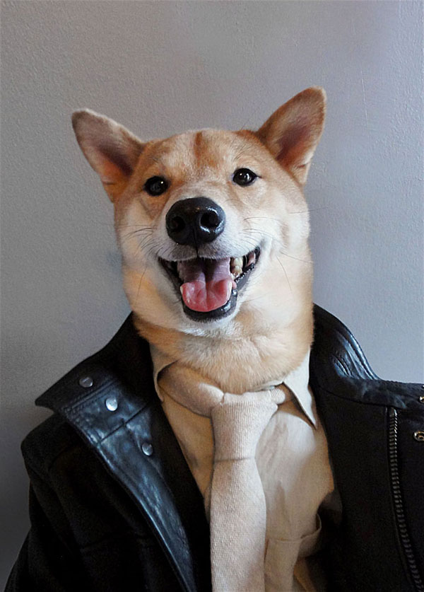 menswear-dog-dressed-in-clothes-fashion-look-book-7