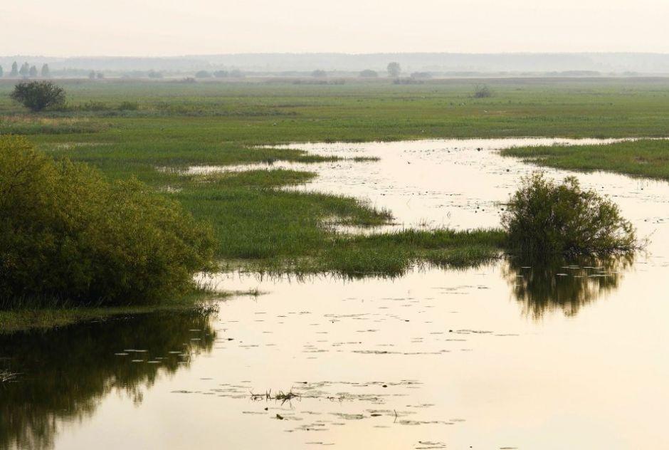 Biebrza River, Biebrza National Park / Łukasz Zandecki /Agencja Gazeta