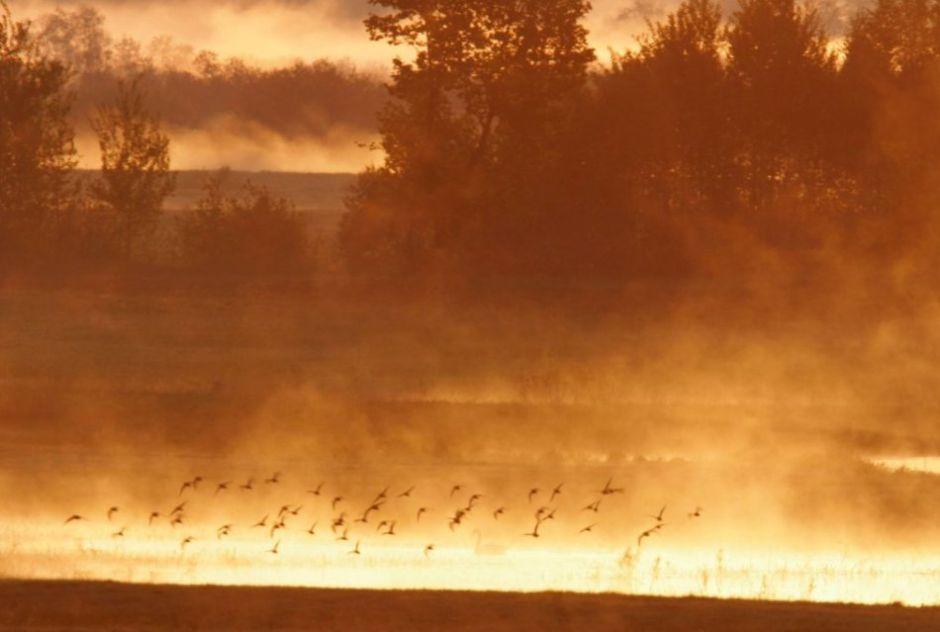 Biebrza River, Biebrza National Park - sunrise in the south pool of Biebrza / Piotr Skórnicki / Agencja Gazeta