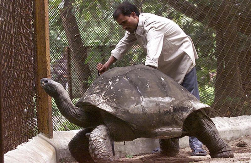 adwaita-aldabra-tortoise-oldest-in-the-world