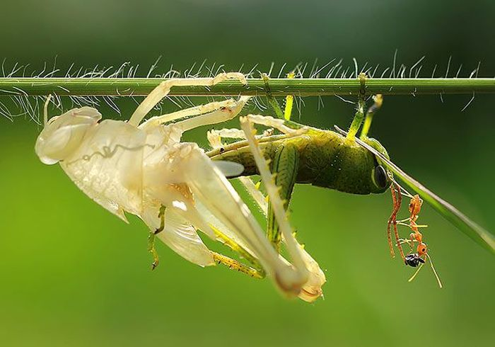 bug_doubler_02