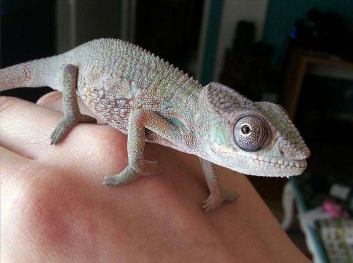 chameleon_02