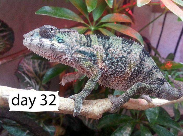 chameleon_03