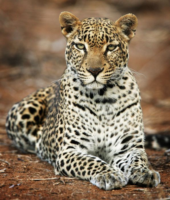 gorgeous_photos_that_will_make_you_want_to_visit_africa_05
