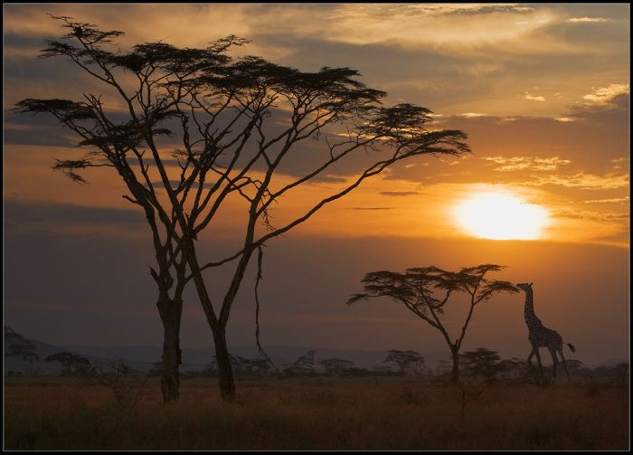gorgeous_photos_that_will_make_you_want_to_visit_africa_24