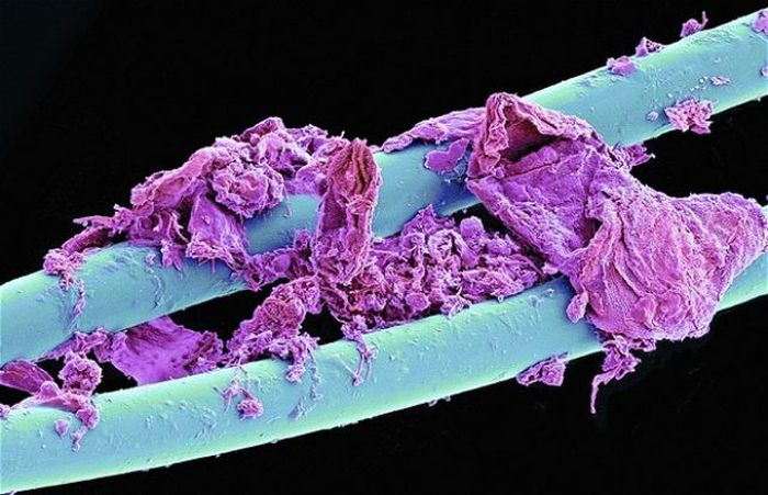 ordinary_everyday_items_look_so_cool_under_a_microscope_25