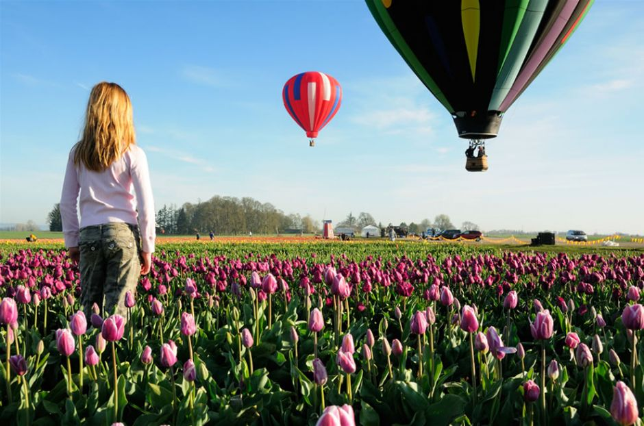 """Dreamin' – Hot Air Balloon Rides over the Wooden Shoe Tulip Farm; it has has over 40 acres of tulips and daffodils. """"Our favorite time of year is when the tulips bloom! There is nothing like the colors of our tulip fields in the spring. Every year the varieties are arranged differently in a new pattern of color as we rotate our tulip fields to a new location."""" Photo by Jesse Millan"""