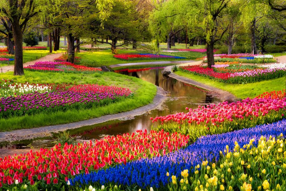 """Serpent Garden in Japan. Tiptoe Through the Tulips """"was also featured in the 2011 horror film Insidious a number of times throughout, and in the thriller film Wrecked as a radiotune. The song was also mentioned in Harry Potter and the Philosopher's Stone on page 34. Vernon Dursley was humming the song while he boarded up small cracks around the front and back doors of his house so he could stop letters from Hogwarts reaching his nephew. The song is played every year by the Holland High School marching band in the Tulip Time festival parades each May in Holland, Michigan."""" Photo by Agustin Rafael Reyes"""