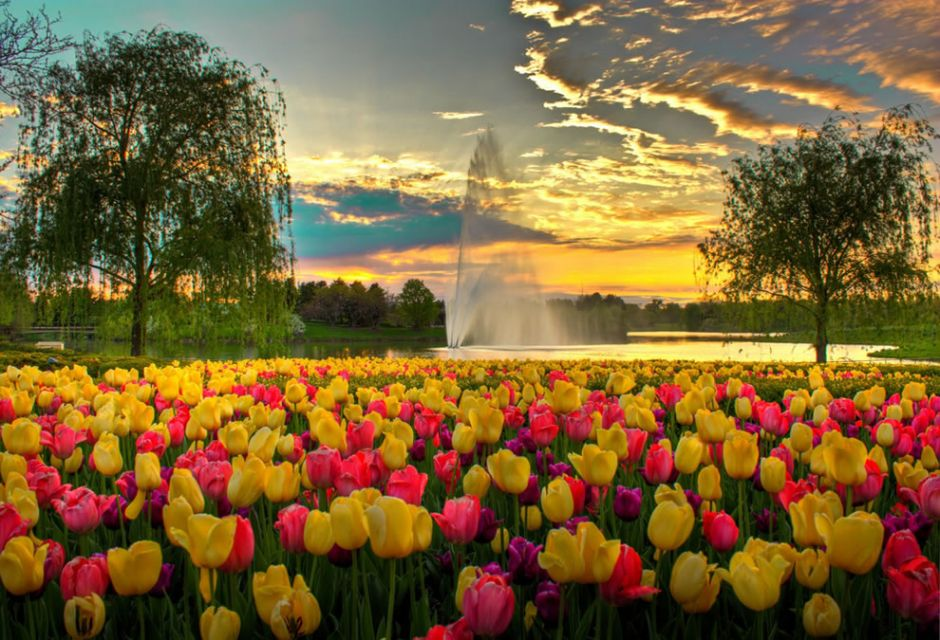 A colorful evening at Chicago Botanic Garden. The photographer won the Picsean World Photo contest with this photo. Photo by Sandeep Pawar