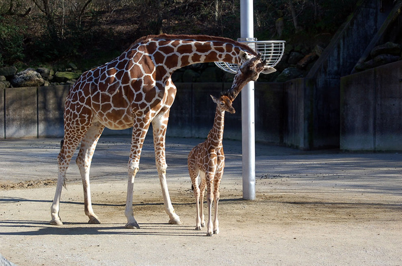She gives her baby a kiss and sees her child off to his/her first day of school. Photo by Memphis CVB