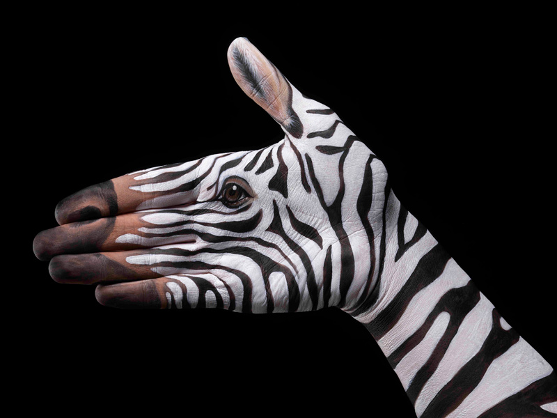 Zebra-on-black1