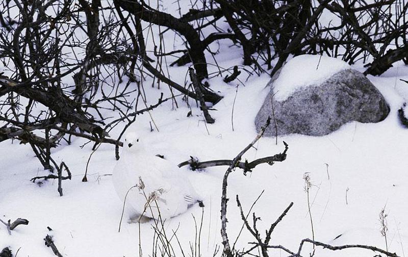 animal-camouflage-3