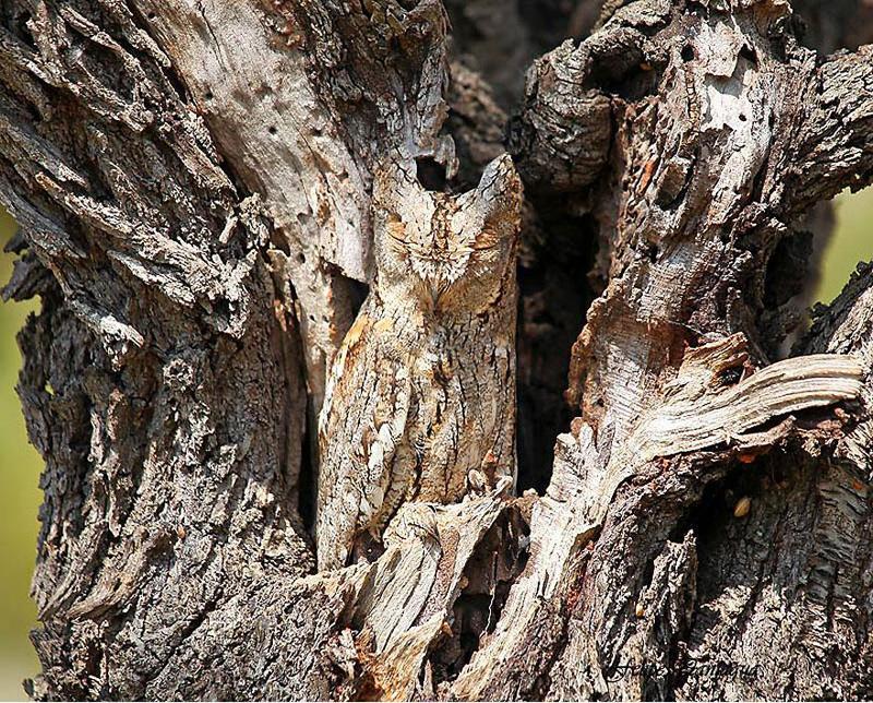 animal-camouflage-4