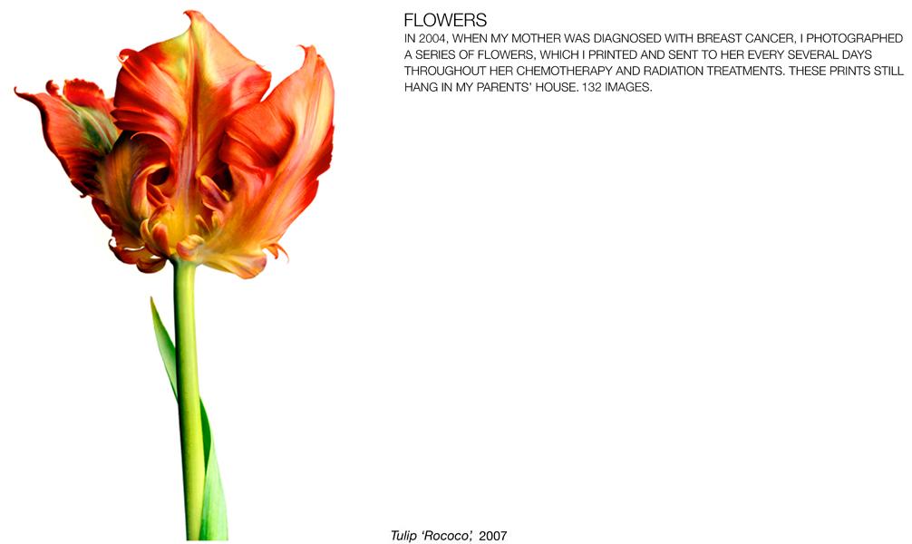flowerimg_01