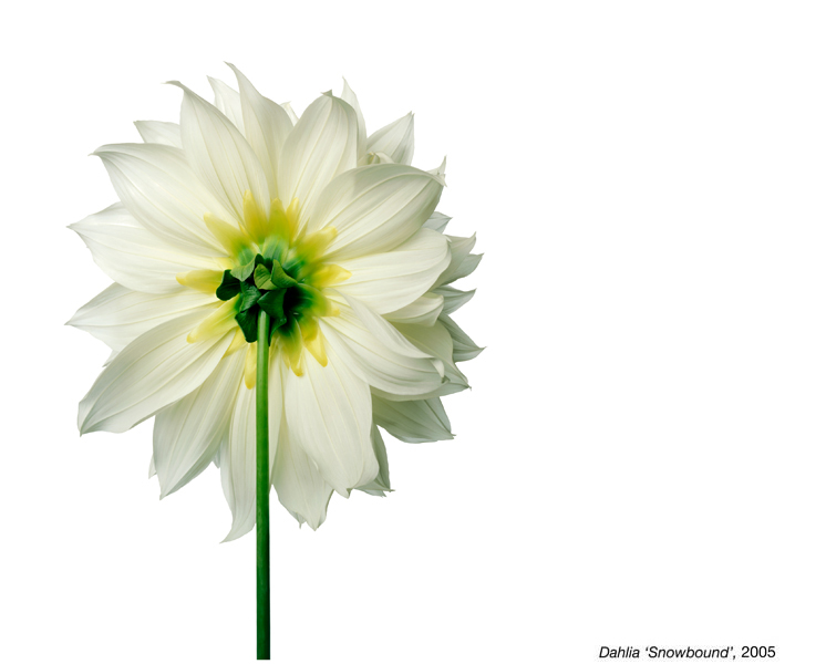 flowerimg_06