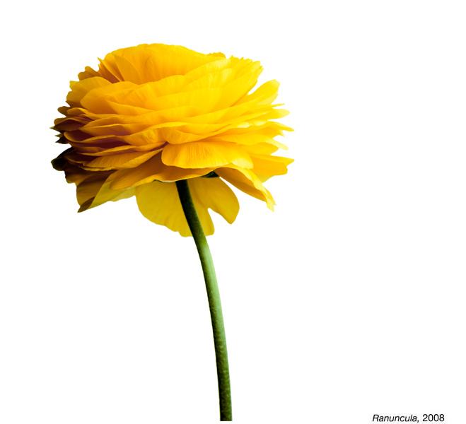 flowerimg_09