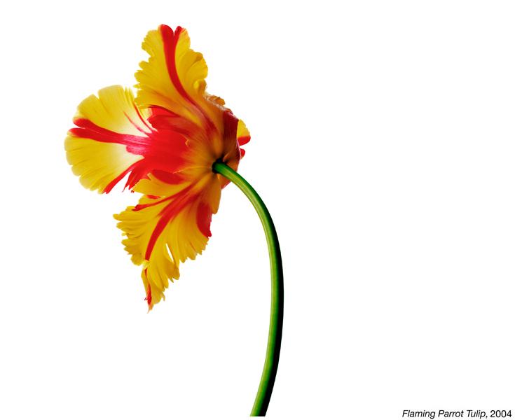 flowerimg_21