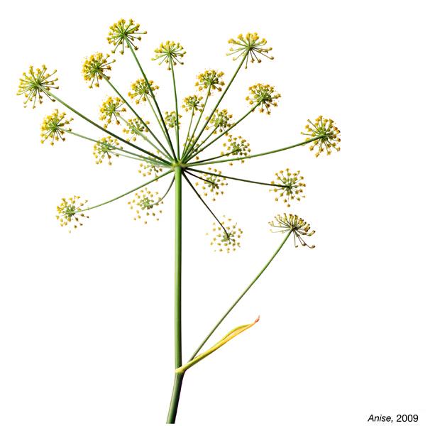 flowerimg_29