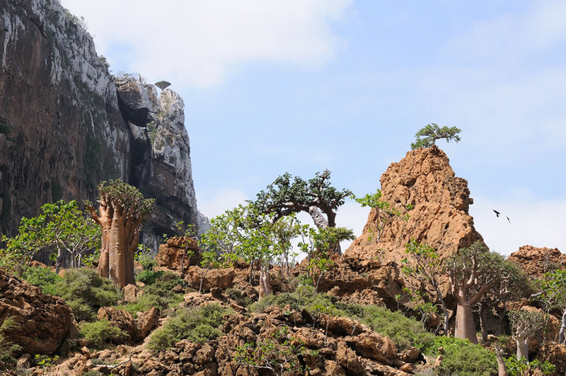 In-2008Socotra-became-a-UNESCO-World-Heritage-Site