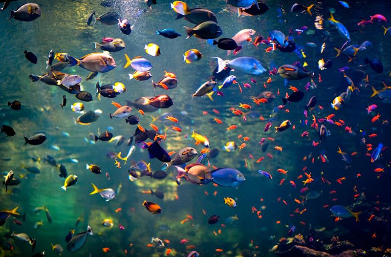 academyfish