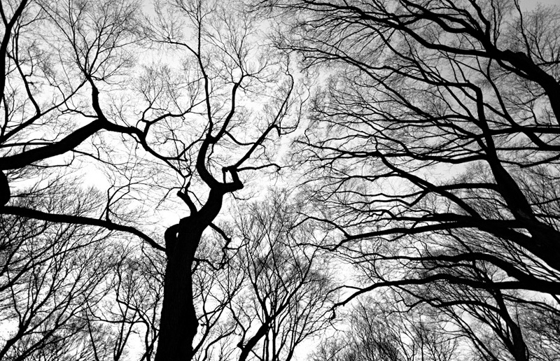 bwbranches