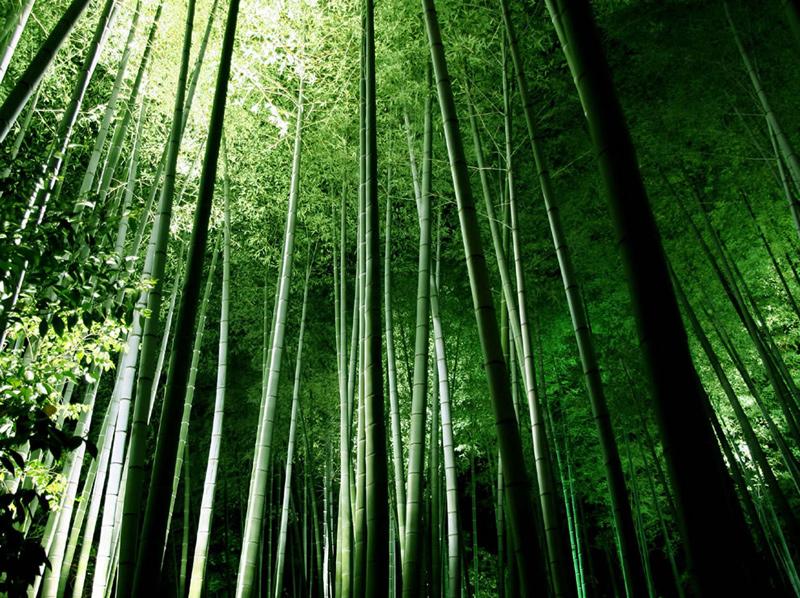 Bamboo-forest-at-Kyotos-Kodaiji-temple