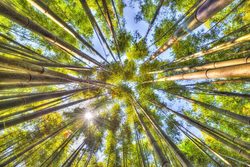 Exploring-Koreas-biggest-bamboo-forest-Jungnokwon