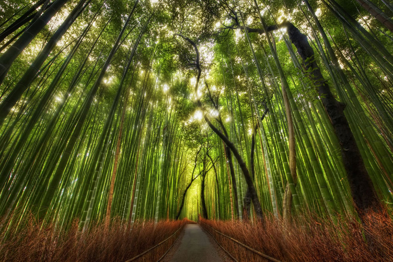 Exploring-the-wilds-outside-of-Kyoto-Bamboo-Forest