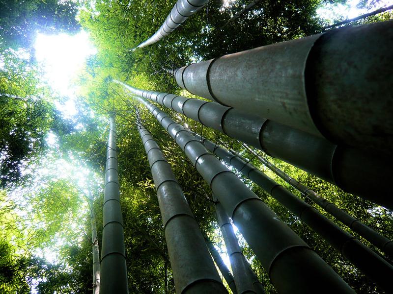Giant-bamboo-forest-Fushimi-Inari