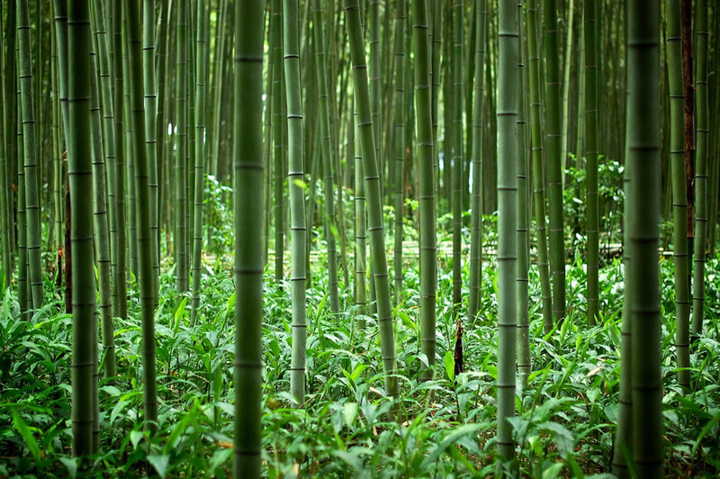 Inside-the-bamboo-forest-of-Kyoto-Japan