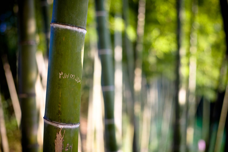 Love-in-the-DamYang-Bamboo-forest