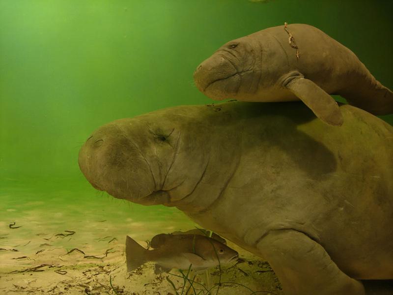 Parker-Manatee-Aquarium-Bradenton-FL