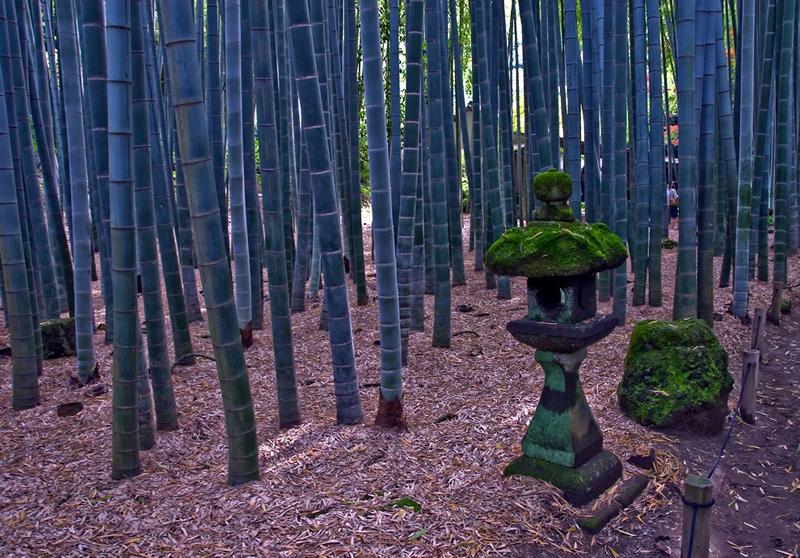 The-bamboo-forest-at-Hōkohu-ji-Kamakura