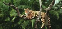 amazon-forest-photo-tour-35