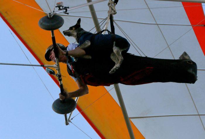 flying_dog_03