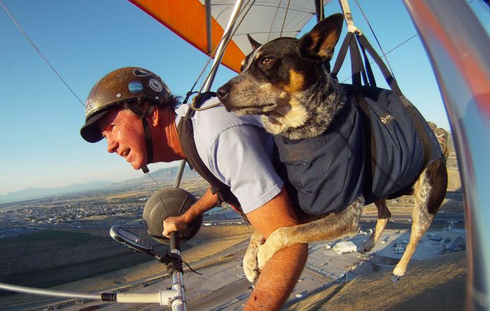 flying_dog_04