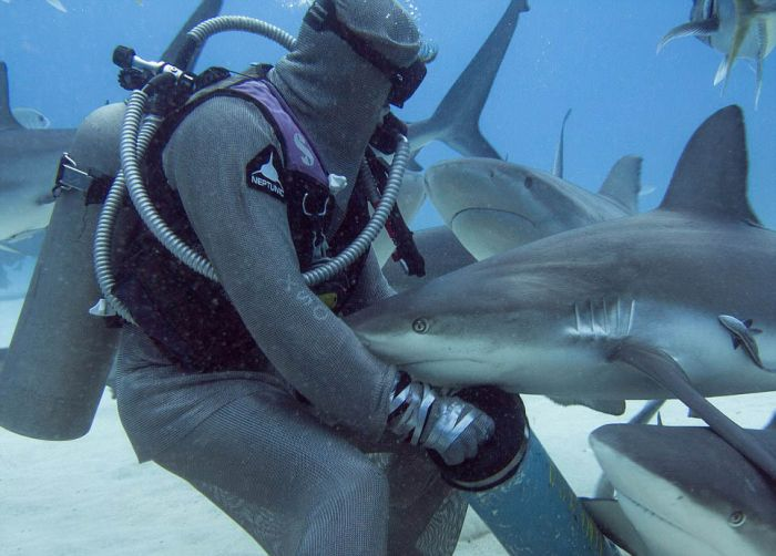 incredible_moment_shark_whisperer_hypnotises_deadly_shark_15_minutes_03