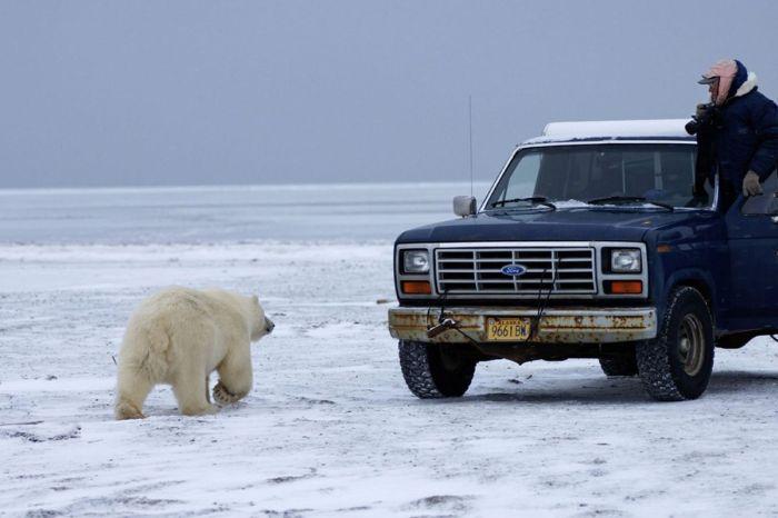 polar_bear_01