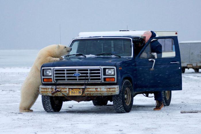 polar_bear_07