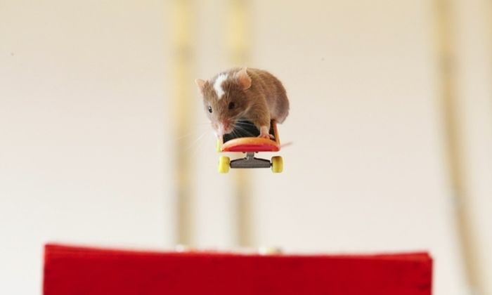 you_have_to_see_these_pictures_of_skateboarding_mice_01