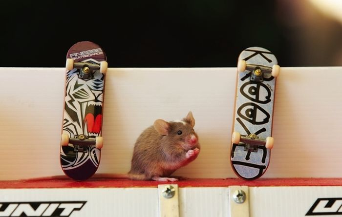 you_have_to_see_these_pictures_of_skateboarding_mice_02