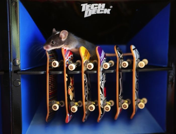 you_have_to_see_these_pictures_of_skateboarding_mice_07