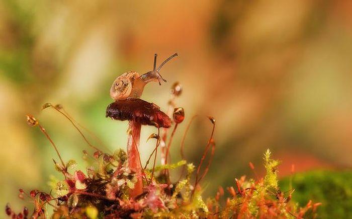 amazing-macro-photography-14